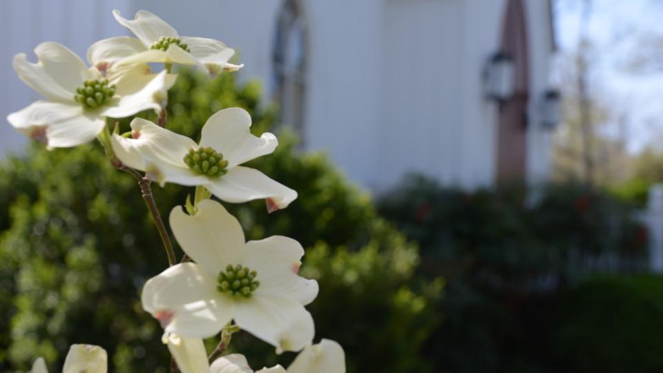 Springtime (13)